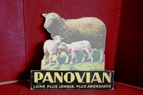 Panovian Sheep Advertising Cut Out Card Arriving Nov