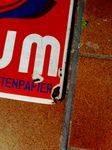 Early SAMUM Cigarette Paper Pictorial Advertising Enamel Sign